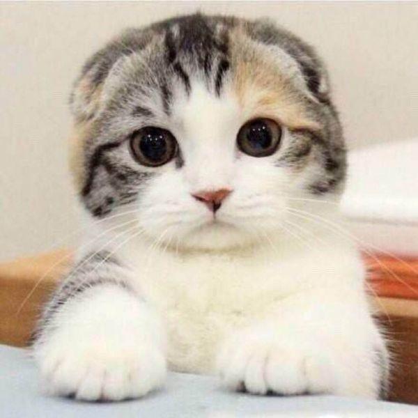 猫晕车怎么办